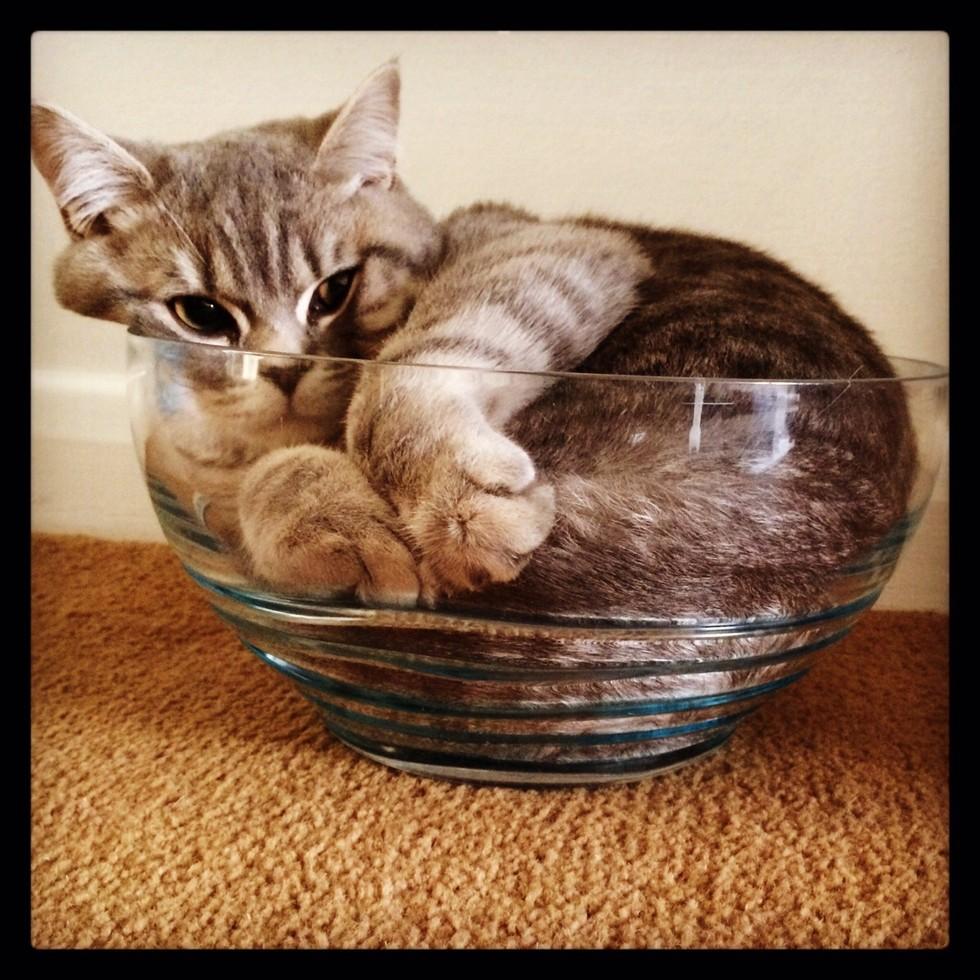 cat breeds similar to siamese