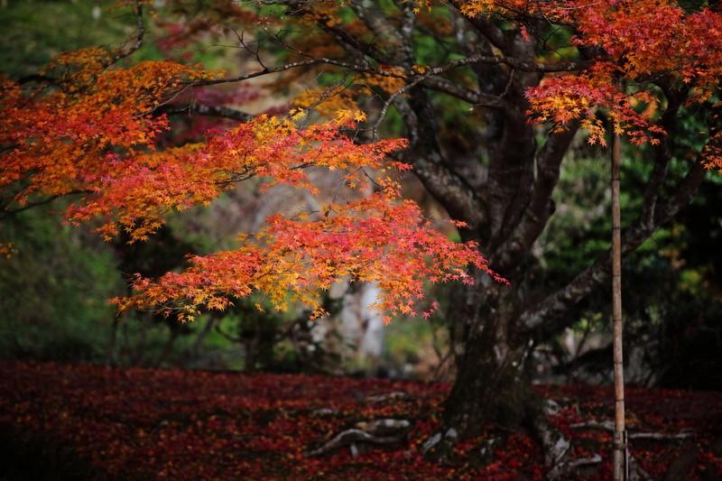 Kyoto & Nara, Japan
