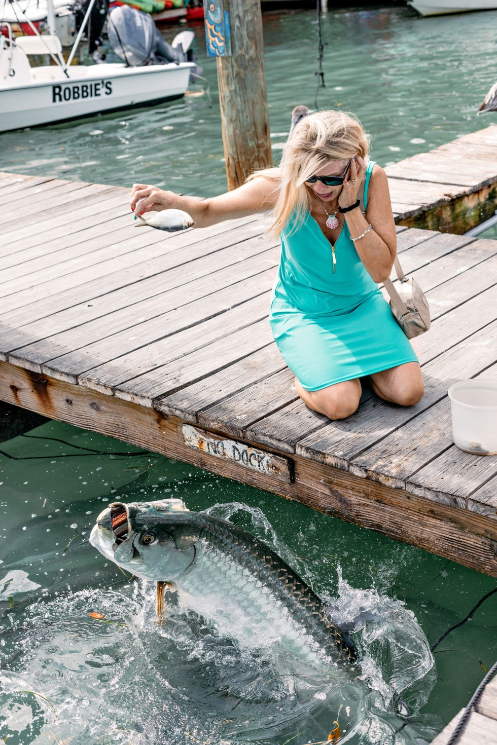 Feeding a tarpon at Robbie's Marina