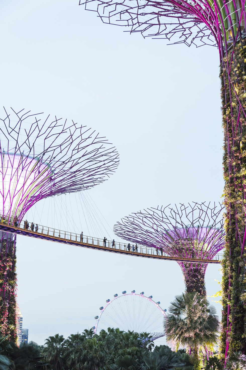 The Supertree Grove and OCBC Skyway at Gardens by the Bay