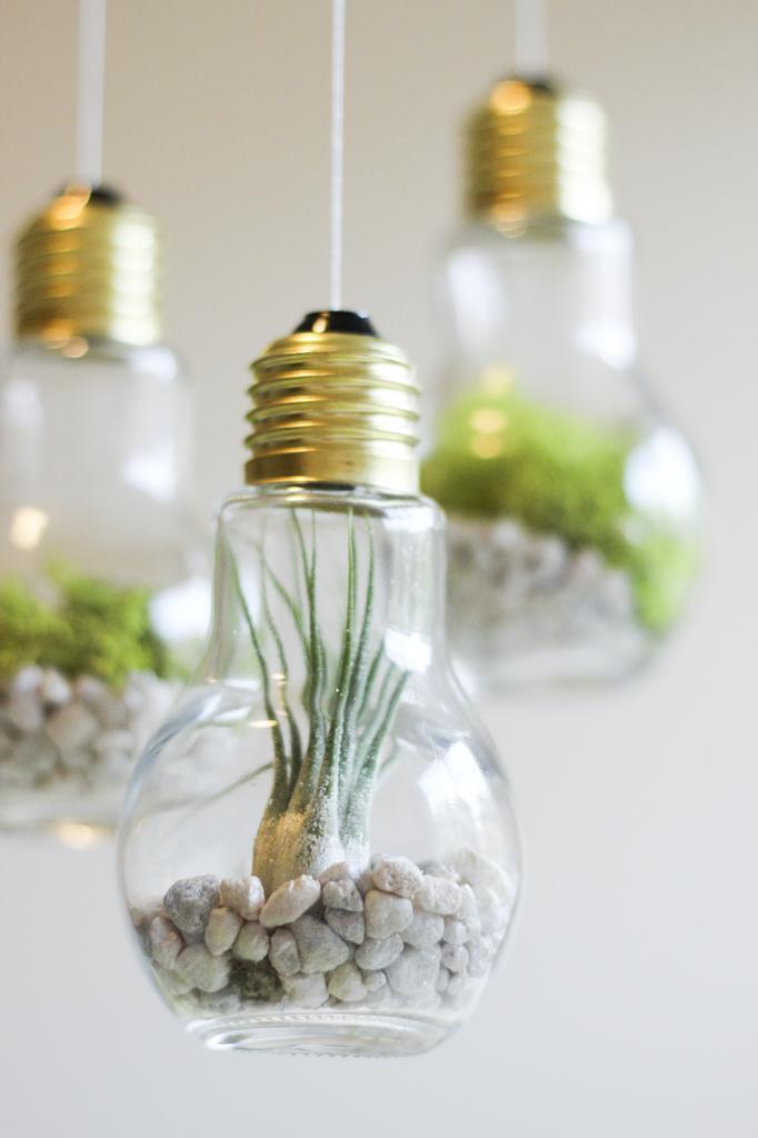 craft projects diy light bulb terrariums the snug. Black Bedroom Furniture Sets. Home Design Ideas