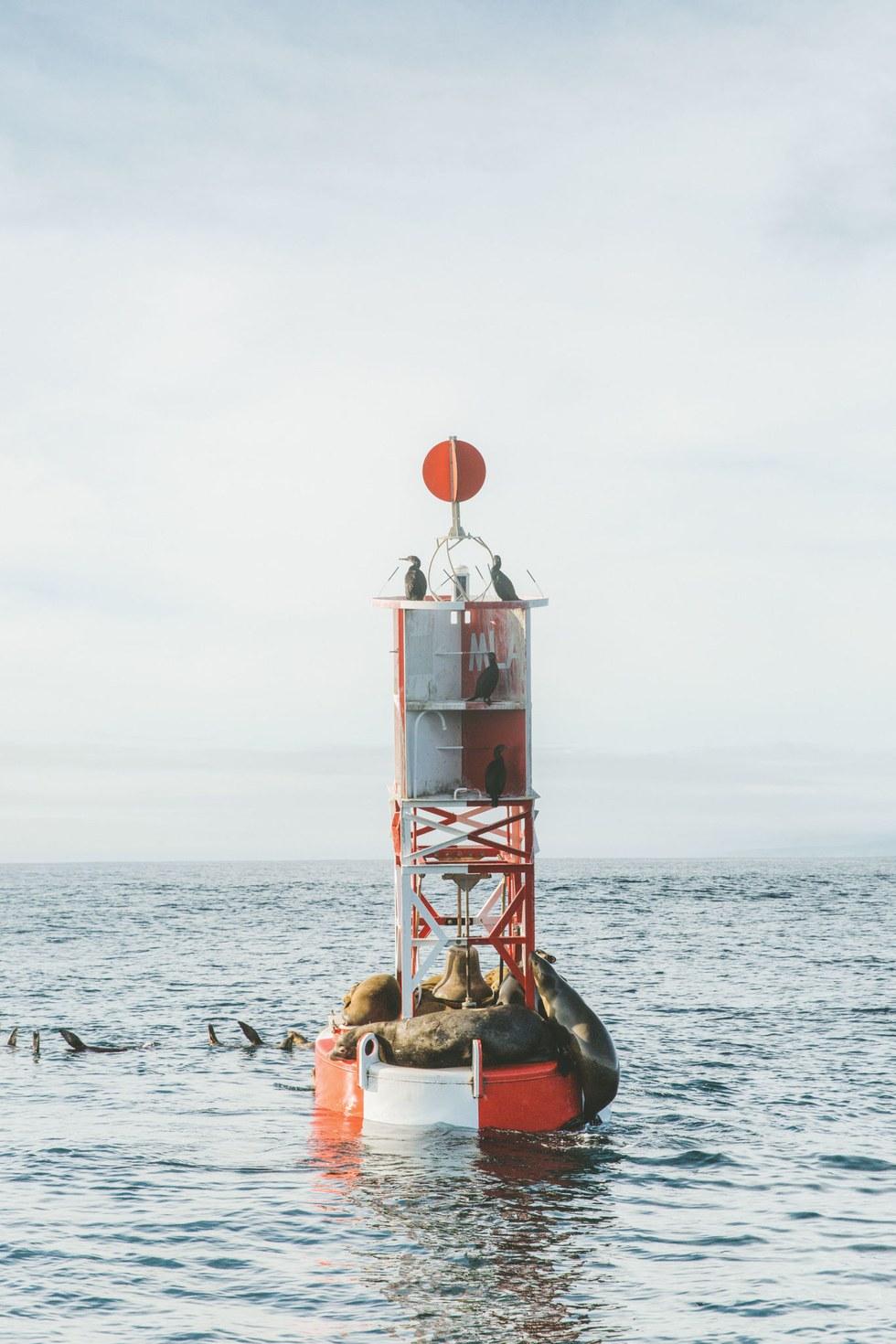Sea lions take a buoy break in Monterey
