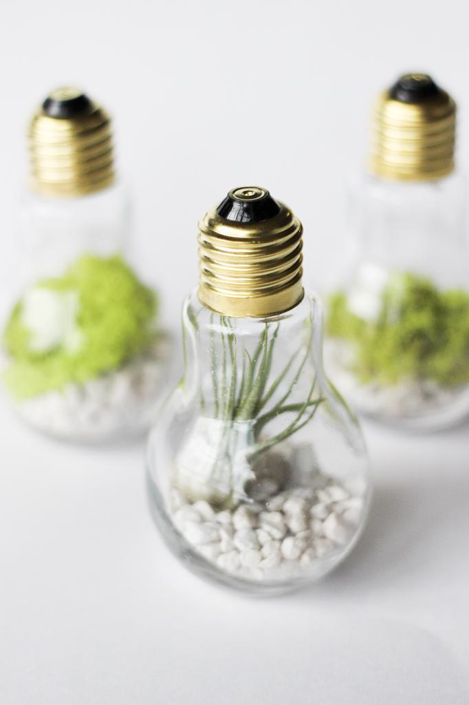 Craft projects diy light bulb terrariums the snug for Light bulb diy projects