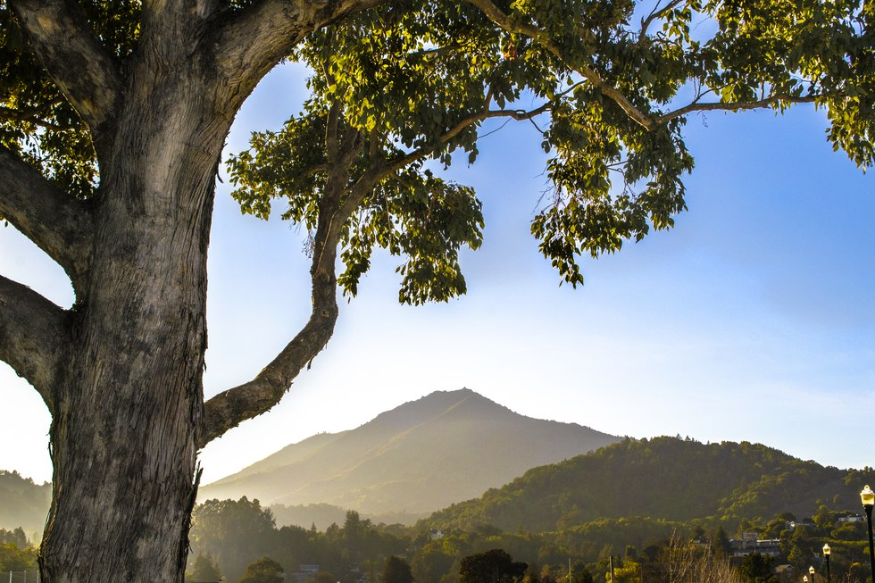 View of Sonoma Mountain in Jack London State Park