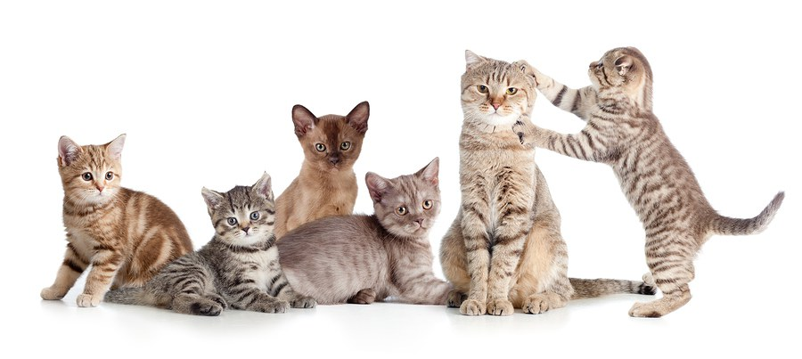 Dog Breeds That Are Compatible With Cats