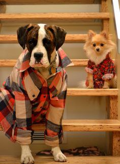 If it's not quite cold enough yet to break out the sweater, then fear not, a well-loved flannel is guaranteed to be waiting for you to break it out for ...