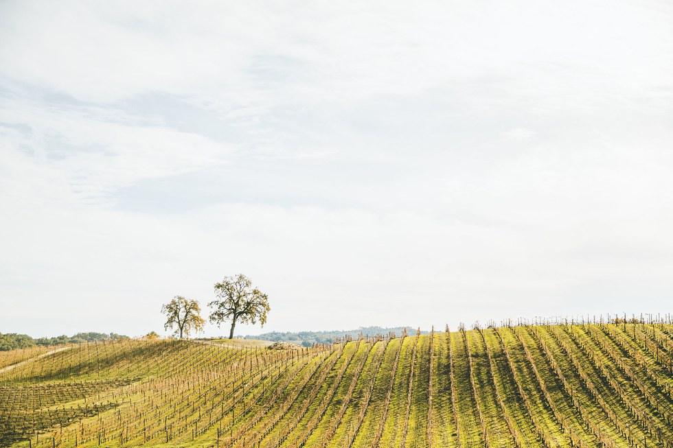 The vineyard at Halter Ranch