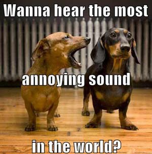 What Is The Best Sound To Calm Dogs