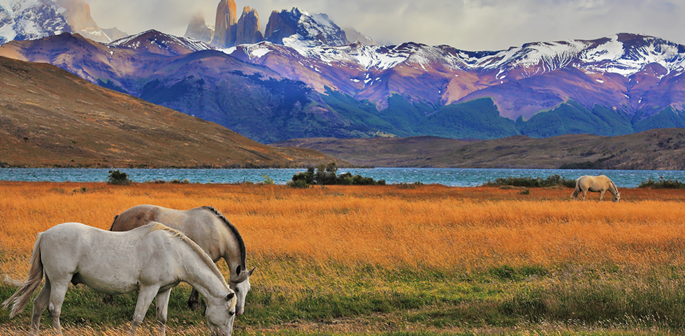 Horses grazing on Patagonia, Chile's rustic landscape.