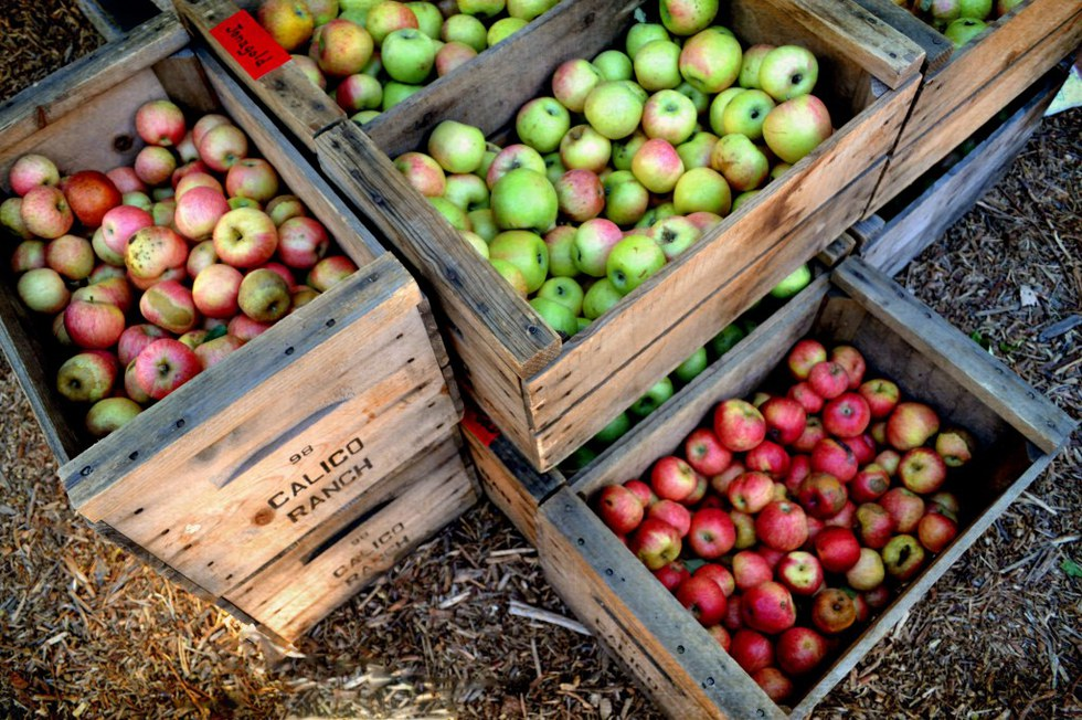 Heading to your local apple farm one fall day with friends to pick up these fall favorites is a must!