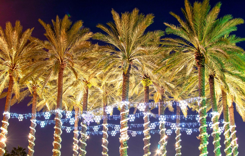 Palm trees link together with Christmas lights