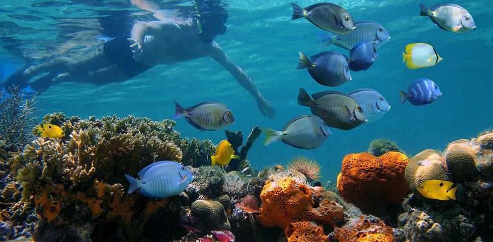 Andros (Bahamas)