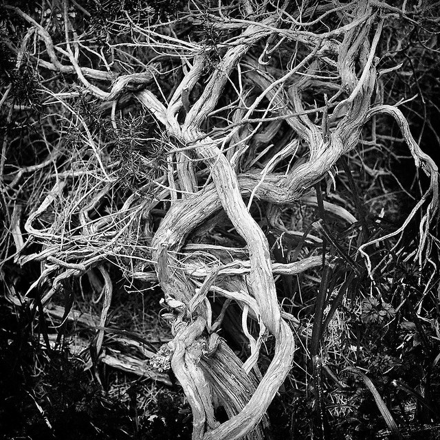 The Entanglements In Our Lives