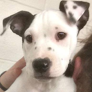 This Puppy Was Born With A Selfie On Her Ear