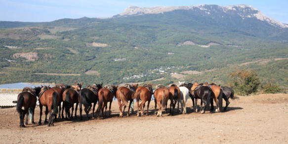 Horses all huddled together on a dude ranch