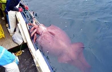 deep-sea gigantism