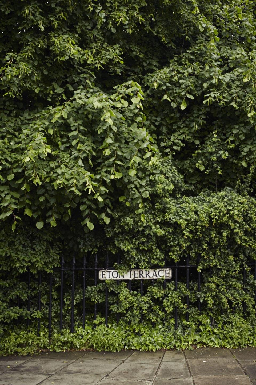 Leafy Stockbridge