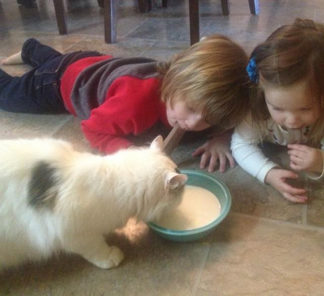 stray cat became kids babysitter and best friend