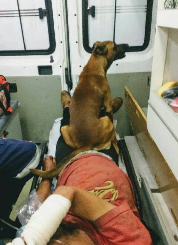 Loyal Dog Waits For His Friend After Riding With Him To The Hospital