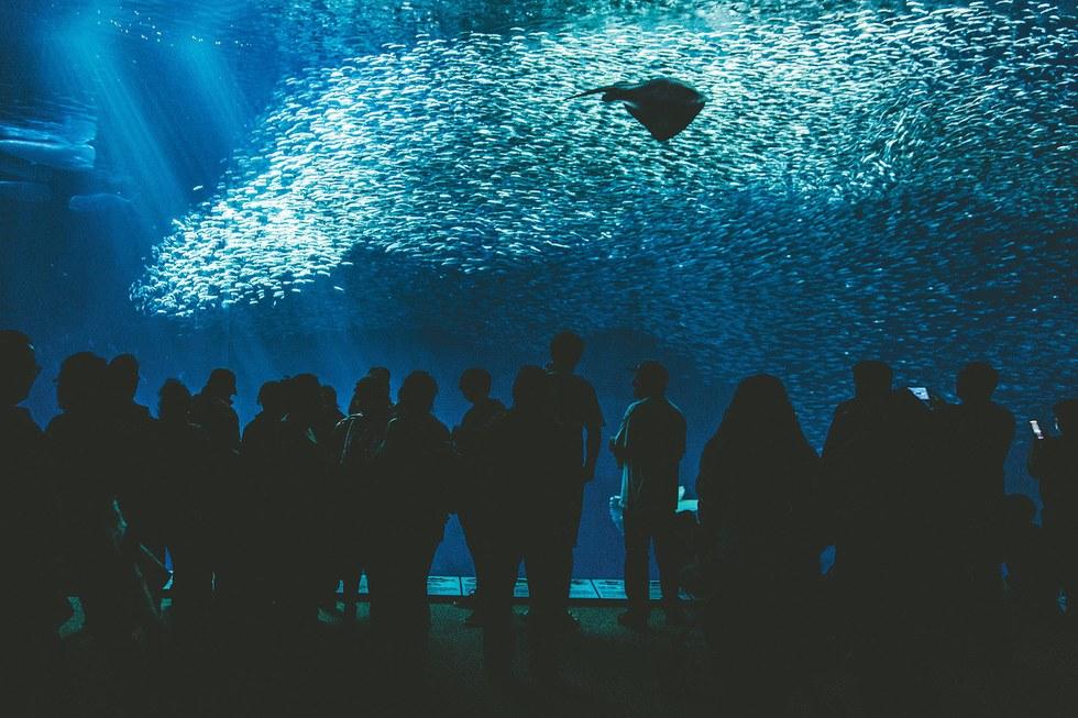 At the Monterey Bay Aquarium